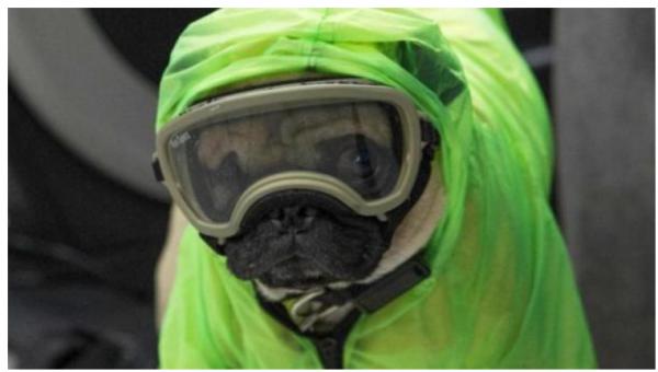 الأوبئة تتحدث عن اصابة الحيوانات بكورونا