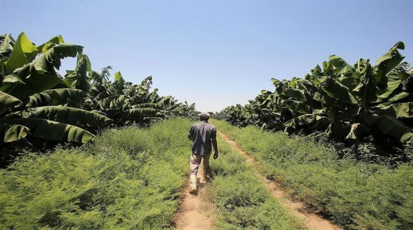 تخفيض رسوم تصاريح العمل لقطاعي الزراعة والمخابز